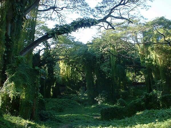 Lista del Patrimonio Mundial. - Página 2 Bosques%20primarios
